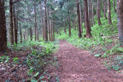 森の中の道になった。緩やかに上...