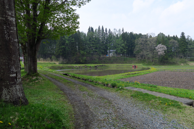 ・・・田園風景が広がる。道なり...