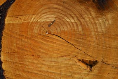 よく、木の年輪で東西南北が分か...