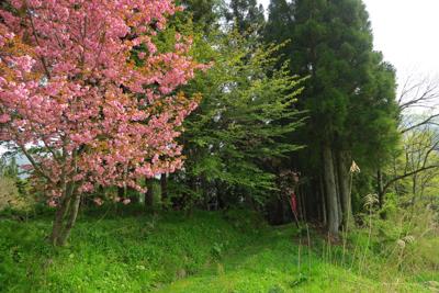八重桜かな?...