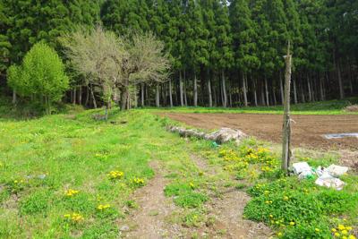 畑の脇を抜けて、植林の森に入り...