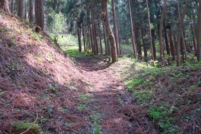 森に入り、つづれ折りの急登を登...
