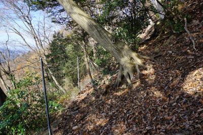 ・・・脚立を越えるより、鹿柵の...