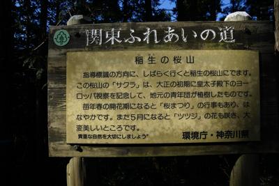・・・稲生(いのう)の桜山とい...