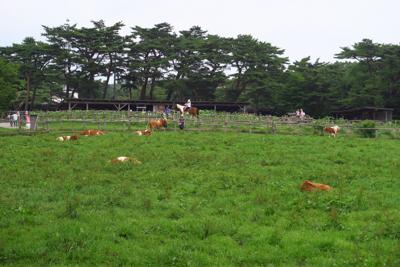 さすが牧場。牛がいる。...