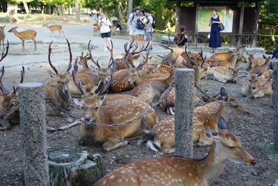 鹿、ど〜ん!...