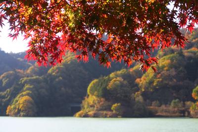 もう、紅葉の季節なんですね。...