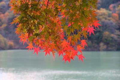 紅葉。...