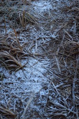 前日の雨は上の方では雪になって...