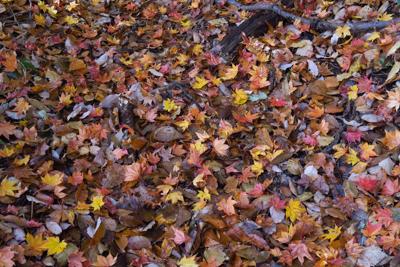 地面に落ちた色とりどりの葉っぱ...