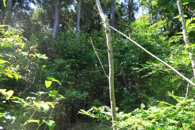尾根上は明るい広葉樹林帯が続い...