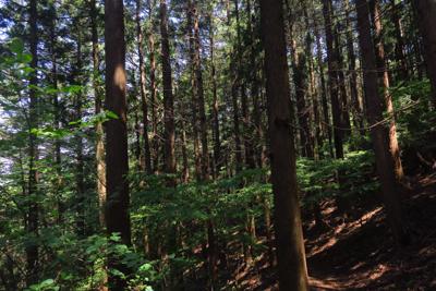 針葉樹林帯の中は薄暗いですね。...