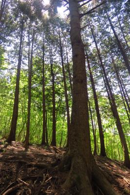 奥に見える広葉樹林帯の緑が綺麗...