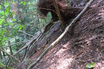 眼の前を大きな倒木が塞いでいる...