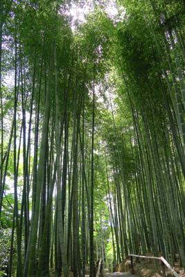 嵐山にも有名な竹林がありますが...