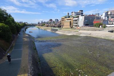 朝の鴨川。...