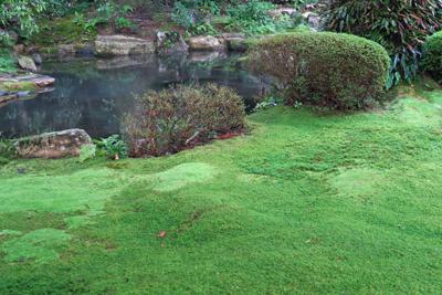 意外に苔のお庭がきれいなところ...