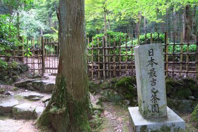 ん? 日本最古之茶園?...