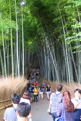 天龍寺の裏に、あの有名な竹林が...