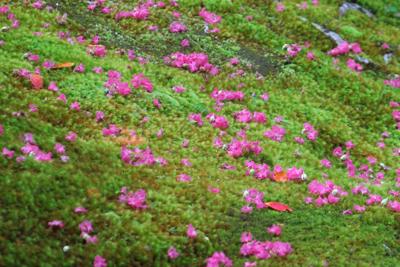 こっちはピンクの花ビラとのコン...