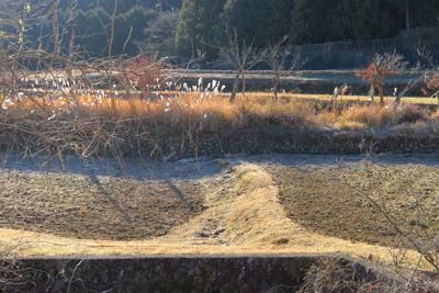 ザ・日本の冬景色。雪がなくても...