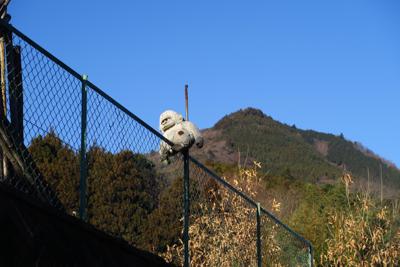 猿と鐘ヶ嶽。略して猿ヶ嶽。。。...