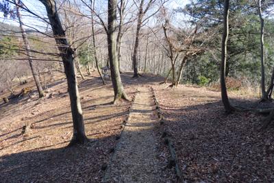 なんか、どこかの森林公園みたい...