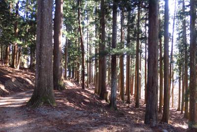 ん? いままで主に広葉樹林帯だ...