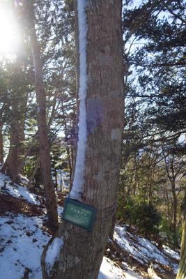 木に雪が線状に付いている。風が...