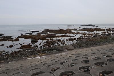 この辺りの海岸は岩だらけ。...
