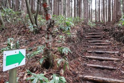 階段を登る。ここら辺りから急に...
