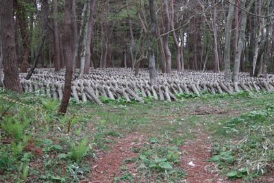 しいたけの原木栽培か?...