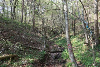 こう見ると、丹沢の山の中を歩い...